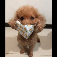 Taiwanese warned not to put masks on pets