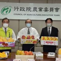 臺灣芒果外銷量僅約3800公噸!農委會:中國消費力下降 將和業者合作開發國際市場