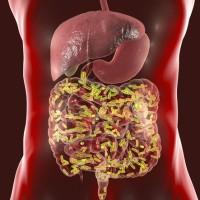 成大:腸道細菌會影響社交行為 台灣美國共同研究成果登《自然 》期刊