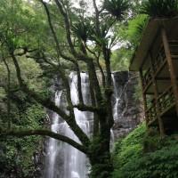 疫情下台灣山林旅遊新主張 林務局:找回與萬物連結共振生命本質