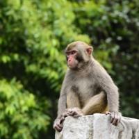 中國爆首例人染猴皰疹病毒 53歲北京獸醫染疫亡