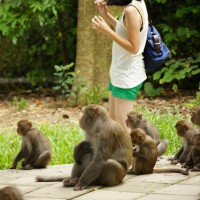 Visitors to Taiwan's Shoushan told to keep distance from monkeys potentially carrying herpes