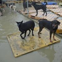 Torrential rain threatens dog shelter in Taiwan's Tainan