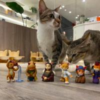 台灣「桌上貓美術館」募資計畫破350萬 攜手「貓咪也瘋狂公益協會」關注浪浪議題
