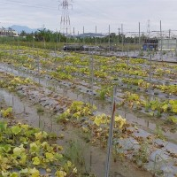 Taiwan agricultural losses hit nearly NT$577 million due to heavy rains