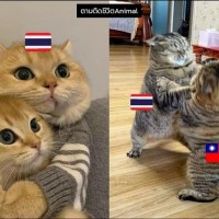 Taiwan claws its way past Thailand to regain Popcat gold