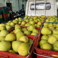 Southern Taiwan city's pomelo harvest expected to increase by 5%