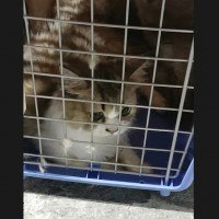 Taiwan to pursue severe punishment of animal smugglers in wake of cat culling