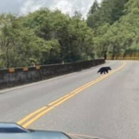 Taiwan black bear spotted on Yushan National Park road