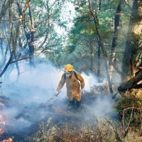 Taiwan Forestry Bureau demands record NT$228 million in compensation for forest fire
