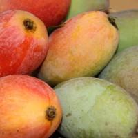 「台語溯源 歡迎指正!」台灣的外來語水果名稱