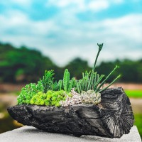 台灣「會呼吸的」木炭花盆問世 林試所盼提升綠色商機