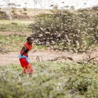 【國家級災難】嚴重旱災加蝗蟲侵襲 肯亞爆糧食危機