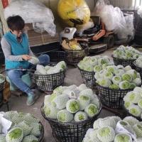 台灣釋迦蓮霧外銷中國遭擋 農委會稱中方作法不符國際規範