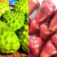 Japanese eager to import Taiwanese custard, wax apples after China ban