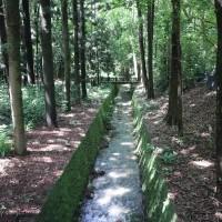 從世界植物到台灣稀有種栽培  嘉義樹木園打造美好植栽保育環境