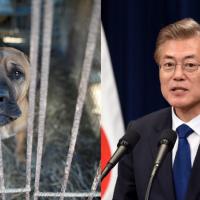 南韓動保意識抬頭 總統文在寅擬明文規定禁吃狗肉