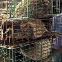 Chinese official urges virus screening for wildlife