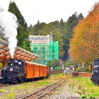 Experience thrill of steam train travel on Taiwan's Alishan during maple season