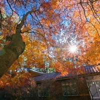 Five maple viewing spots recommended in Taiwan