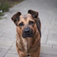 後疫情時代另類受害者 英國無良飼主將寵物扮成「流浪狗」