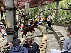 Animal behavior academy opens in Taipei
