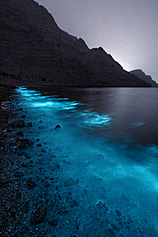 不只台灣馬祖有 阿曼海邊驚現「藍眼淚」