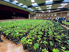 Cops bust biggest marijuana grow-op in Taiwan's history