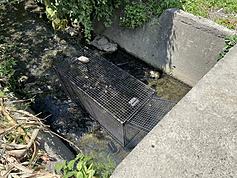 Runaway caiman found hiding in sewer in northern Taiwan