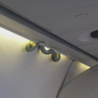Snake on a plane: Live reptile intrudes on flight in Mexico