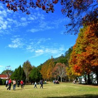 Photo of the Day: Maple leaves turning red in Nantou