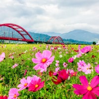 Photo of the Day: Flowers blooming in Huatung Valley