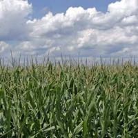 行軍蟲入侵非洲 糧食作物產量大減恐引發危機
