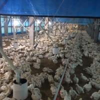禽流感疫情再擴大 林全:防疫視同作戰