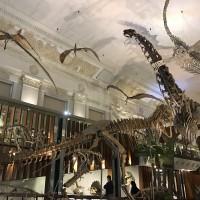 驚奇四月天  到恐龍博物館與古生物共舞