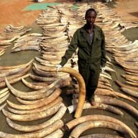 盜獵、盜伐、盜賣防不慎防 45%世界自然遺產淪陷