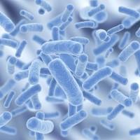 益生菌的功效與突破