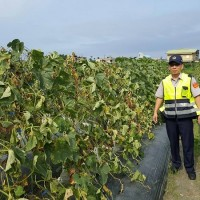 Police in a Taiwanese small town have to patrol both streets and melon farms