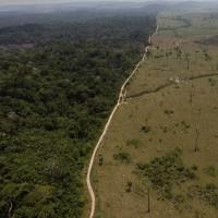 巴西違約大砍森林 挪威揚言撤回環保補助