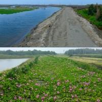 種樹護地球 慈心投入台西海岸造林活動成果豐