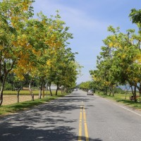 Picturesque Hualien County Road 193 blooming with season flowers