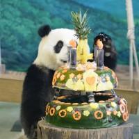 圓仔滿4歲 台北動物園送蛋糕慶生