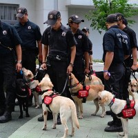 Taiwan's police dogs secure venues for Universiade