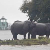 印度國家公園30年來最大洪水 瀕危動物大量喪生