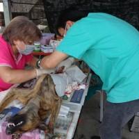 免費犬貓3合1絕育活動 絕育、疫苗注射一次搞定