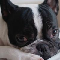 狗狗打疫苗就萬無一失? 7成飼主易犯的致命錯誤