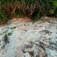 Deux ans d'attente pour le retour des tortues marines à Pratas