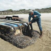 日本311海嘯  近300種生物隨寶特瓶遷徙