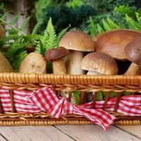 研究:蘑菇富含抗氧化劑 可降低阿茲海默症風險