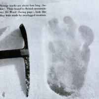 科學家公布DNA檢測 解開喜馬拉雅山雪怪之謎